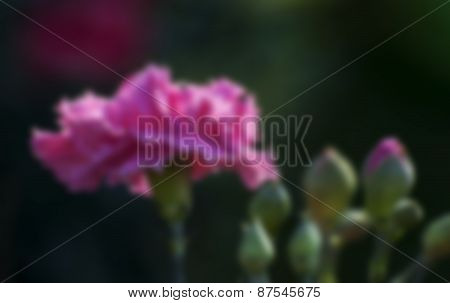 Blurred Pink Rose Petals With Buds, Dark Background