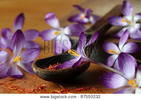 Dried saffron spice and crocus flowers