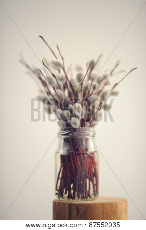 Bunch Of Pussy Willow Twigs In Glass Jar On White Background