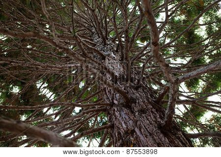 Thick southern tree
