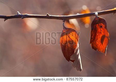 Tree Branch With Dried Leaf