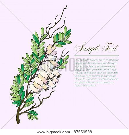bearberry twig with flowers