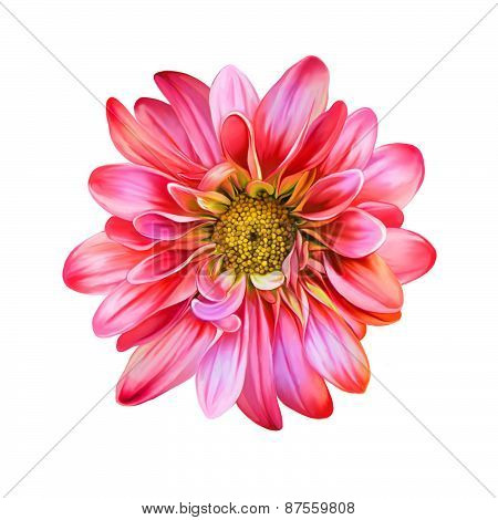 Bright Mona Lisa flower, Spring flower.Isolated on white background