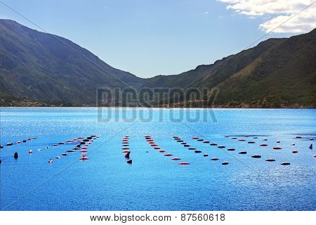Plantation of mussels in the sea, neat rows, mountains