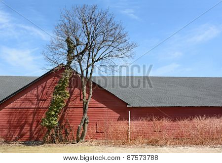 A red barn with dead winter trees and a blue cloudy sky.
