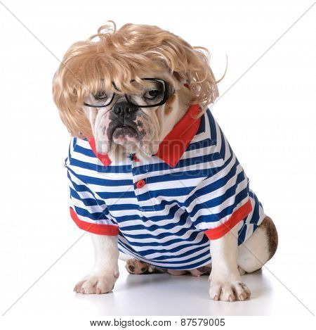 dog dressed up like a human with wig, glasses and shirt on white background
