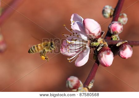 March of the Bee