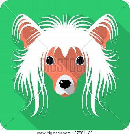 dog Chinese Crested icon flat design