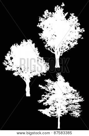 illustration with trees silhouette isolated on black background