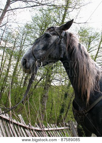 Portrait Of A Horse In Profile