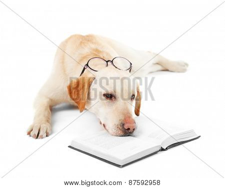 Cute dog with glasses and book isolated on white background