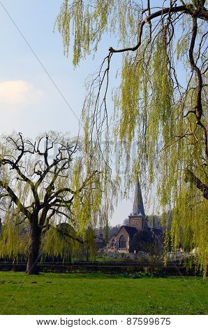 Weeping willow trees at Godlaming