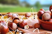 stock photo of shells  - Group of appetizing hazelnuts in shell and shelled on a wooden table in field front view