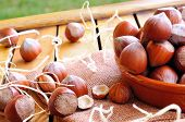 foto of shells  - Group of appetizing hazelnuts in shell and shelled on a wooden table in the field - JPG