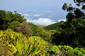 stock photo of vegetation  - Lush vegetation above the clouds on the mountain top of Sera on the island of Fogo Cabo Verde - JPG