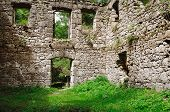 image of vegetation  - stone wall of an old ruined building in vegetation - JPG