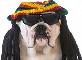 stock photo of dreadlocks  - funny dog with dreadlock wig on white background - JPG
