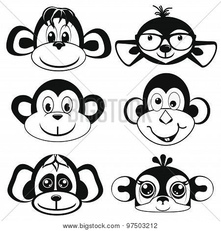 Funny differently monkey. Face of monkeys.