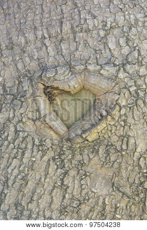 Natural heart on a tree trunk