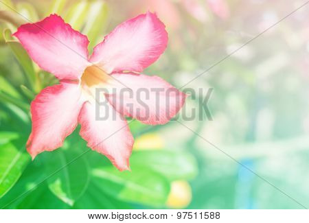 Abstract Blurry of Flower and colorful background.