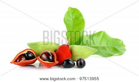 Sweet Chestnuts (sterculia Monosperma) On White Background
