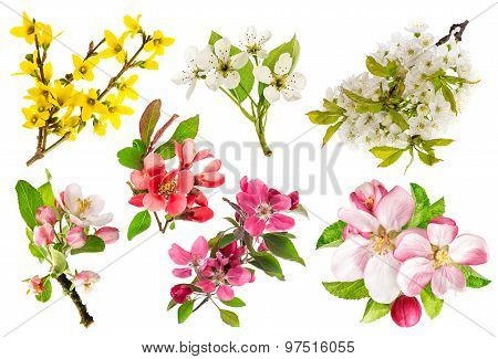 Blossoms Of Apple Tree, Cherry Twig, Forsythia. Set Of Spring Flowers