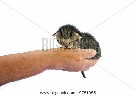 Senior's hands holding kitten