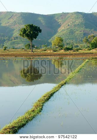 Agriculture Field, Tree, Mountain, Reflect