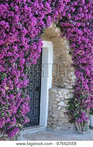 Door to the house covered by violet bougainvillea flowers