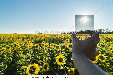 Photographer Holds Neutral Gray Filter In Field With Sunflowers.
