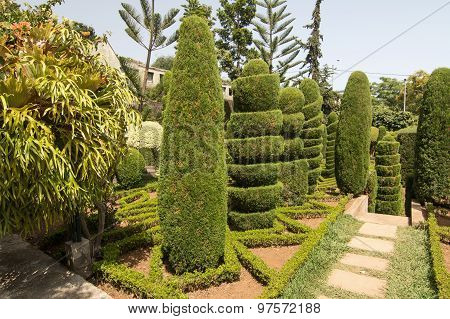 Topiary In Botanical Garden Of Funchal, Madeira Island