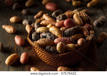 Raw Organic Fingerling Potatoes