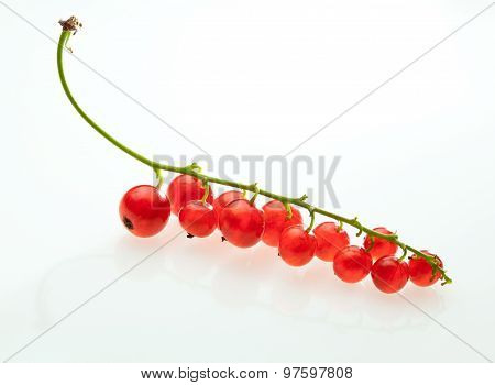 Macro Of Red Currant Bunch
