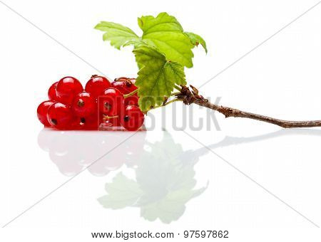 Red Currant Branch On White Reflective Plane