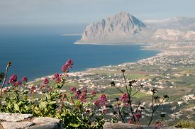 pic of promontory  - Flowered valerian plant and the promontory of Mount Cofano in the background - JPG