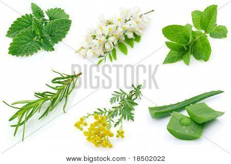Fragrant medicinal herbs