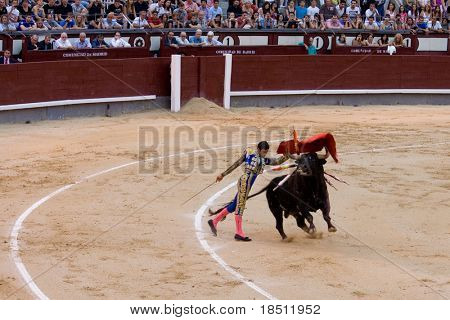 MADRID - AUGUST 8: The torero Juan Pablo Sanchez fights a bull named Mayoral in the Las Ventas bullring on August 8, 2010 in Madrid, Spain.