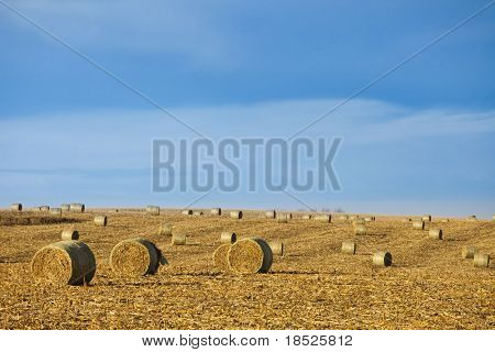 baled corn in field with room in sky for copy
