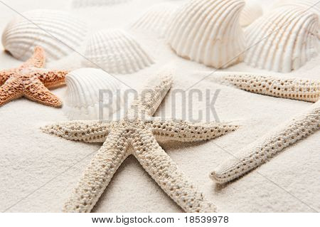 White Starfish