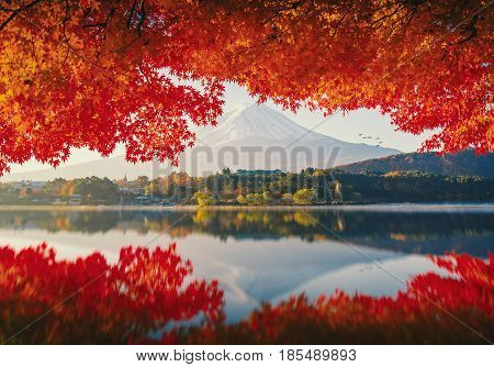 MtFuji in autumn