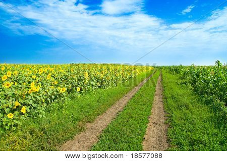 a rural road goes to horizon between two field
