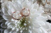 Wedding Rings Close-up On White Chrysanthemum.chrysanthemums And The Wedding Ring.thin Wedding Rings poster