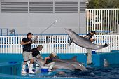 VALENCIA, SPAIN - OCT 24: Dolphin trainers preparing before a show at the Oceanografic, which receiv