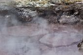 Bubbling Mud Pool in New Zealand