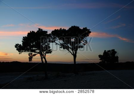 Cedar Tree Silhouette