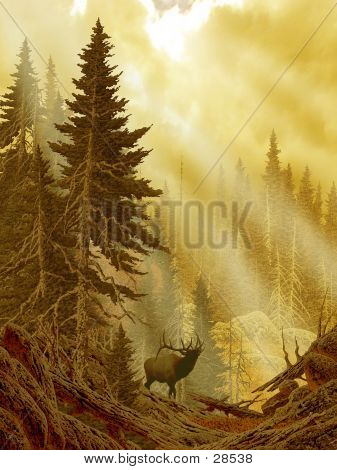 Elk In The Rockies