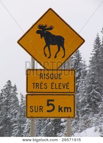 Moose road sign
