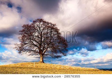Memorable tree