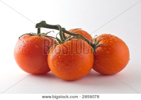 Red Ripe Tomatoes Against White