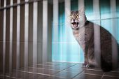 Sick cat waiting for treatment in cage of veterinarian clinic poster